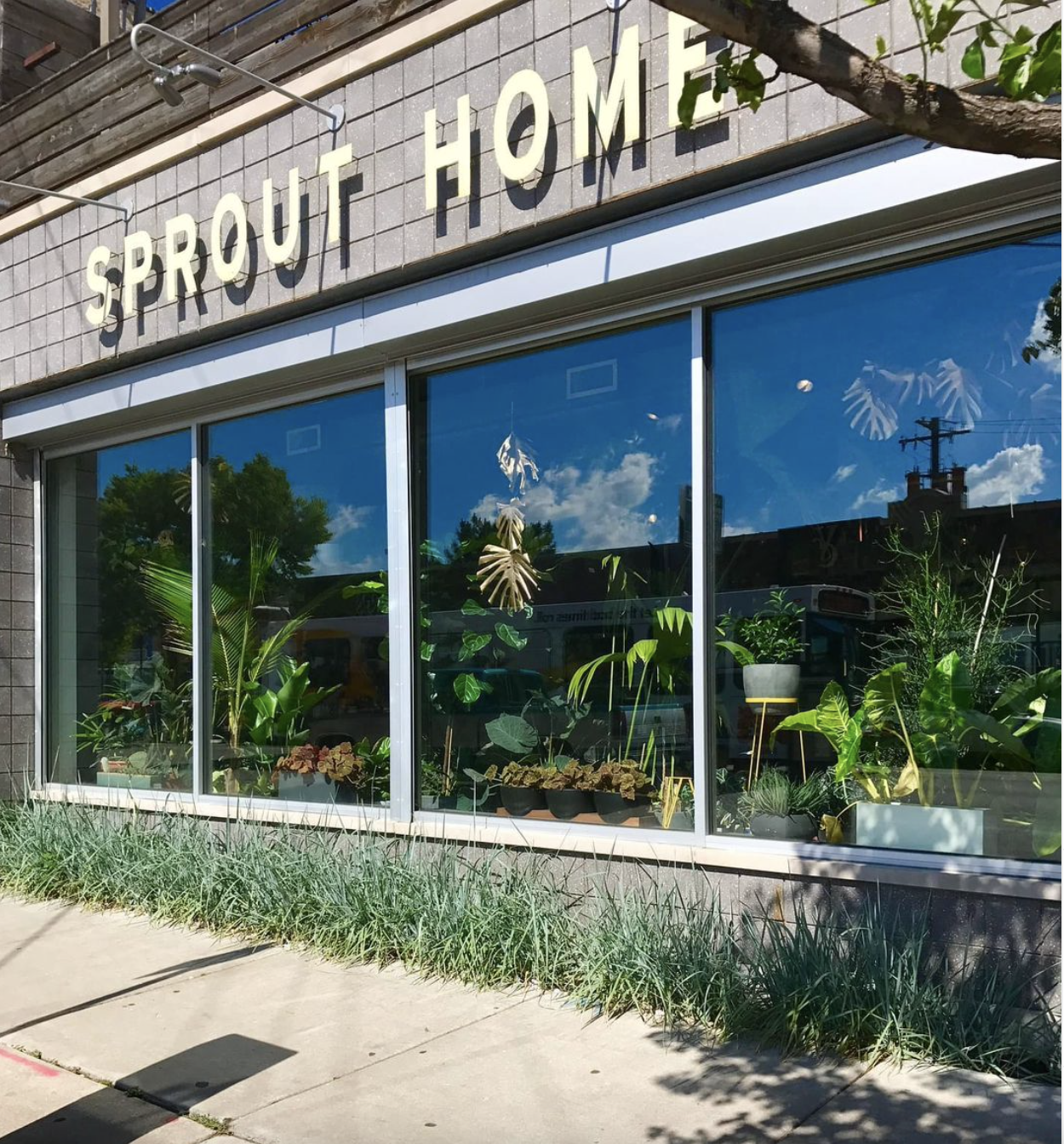 Storefront of Sprout Home Chicago
